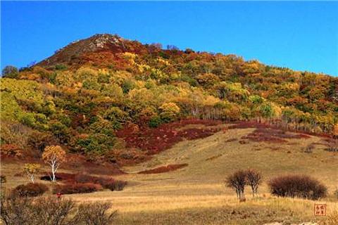 五彩山有沙杨树,柞树,桦树,枫树,松树,杉树,槐树,榆树,柳树等,还有虎