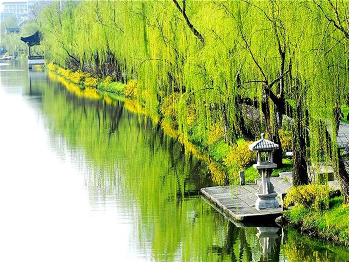 【原创】 七律 柳 - 浩然客 - 梅苑