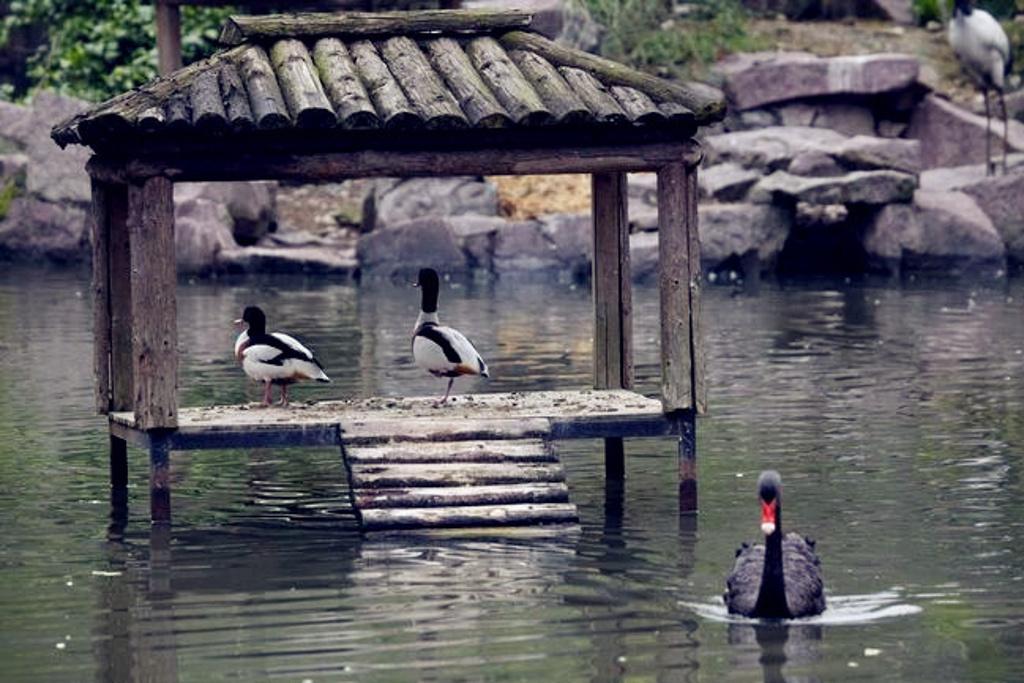 温州动物园旅游景点图片