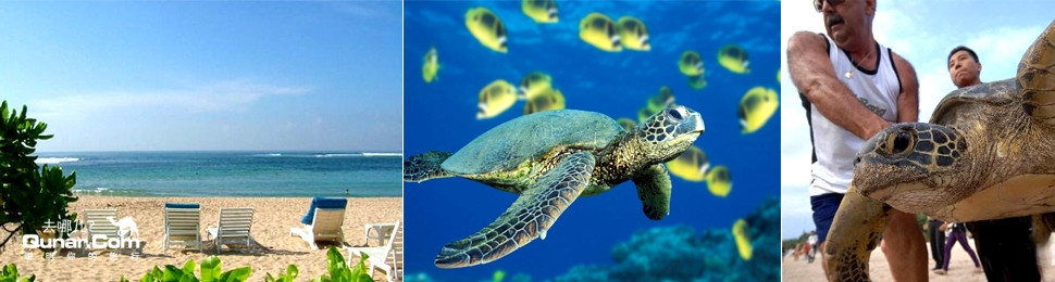 听海龟爸爸讲关于海龟的故事:海龟是存在了两亿多年的史前爬行动物,是
