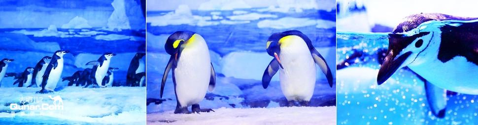 极地动物展示区——由海豚交流广场,北极熊馆,海狮馆,海象馆,企鹅馆