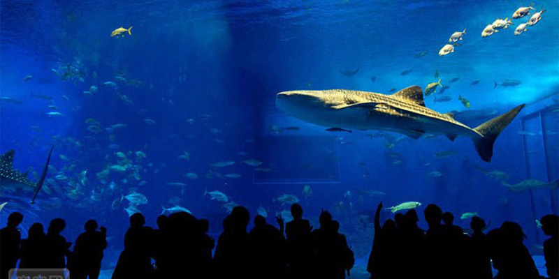 壁纸 海底 海底世界 海洋馆 水族馆 桌面 800_400