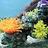 蔚蓝的珊瑚海