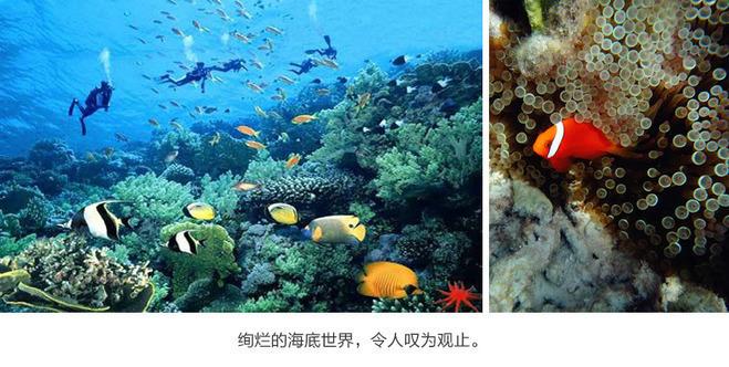 壁纸 海底 海底世界 海洋馆 水族馆 659_332