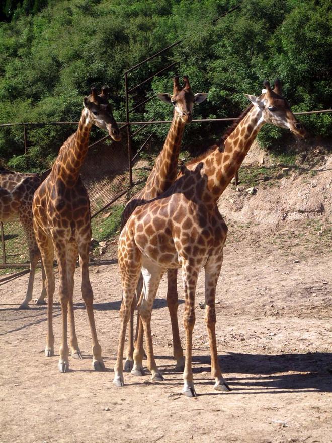 北京八达岭野生动物园一日游 ---美乐假期