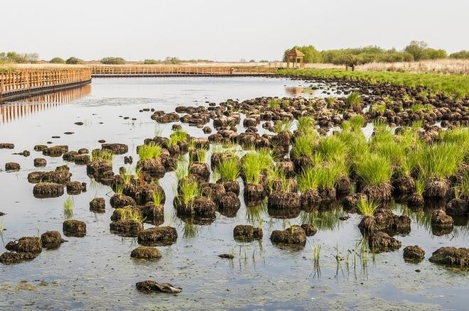 乘船游览黑龙江,乌苏里江和抚远水道,是黑瞎子岛之旅的最大亮点.