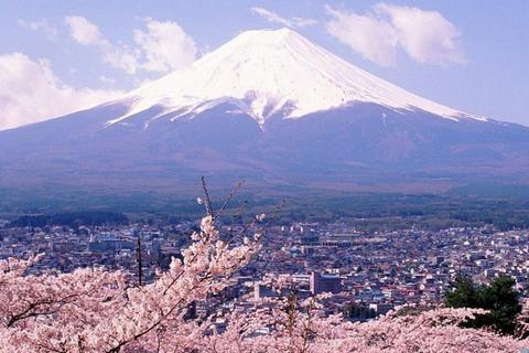 樱花【忍野八海】(约30分钟)所谓「忍野八海」,其实是富士山的雪水流