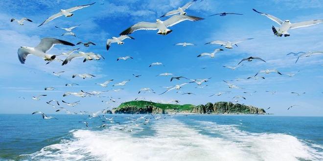 """海驴岛 2011年8月,中国野生动物保护协会授予海驴岛""""中国黑尾鸥之乡"""