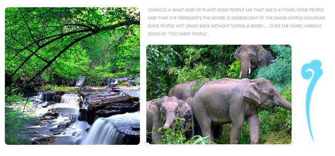 普洱西双版纳中缅边境3晚4天游 与犀牛,长臂猿,小熊猫
