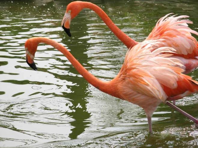 永川野生动物园步行区内,观赏灵长类动物,大型食草动物,两栖海洋动物