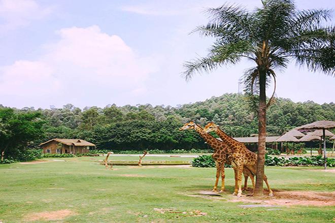 是全世界动物种群最多,最大的野生动物主题公园.