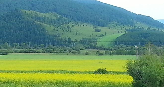 看草原 泡温泉,呼伦贝尔大草原,阿尔山森林公园4日自由行(住蒙古包)
