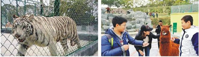 10:30 参观景区【 动物园】,目前园内动物品种达20多个,包括有