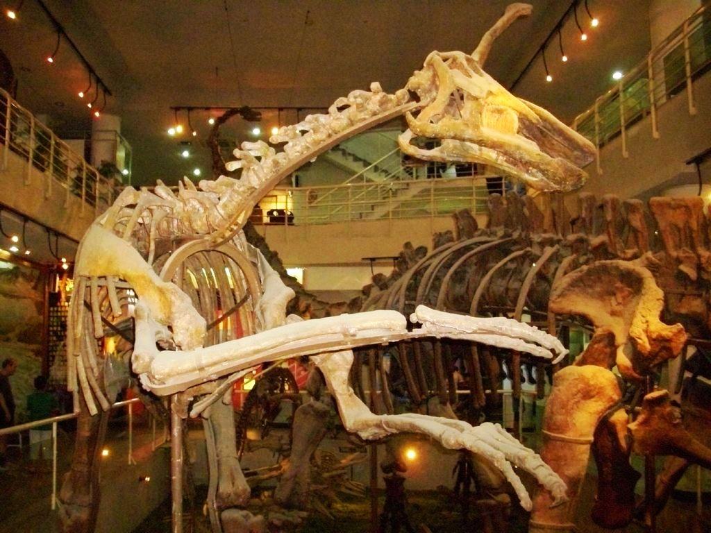 中国古动物馆-图片by落花无情谁有情-旅图-去哪儿网