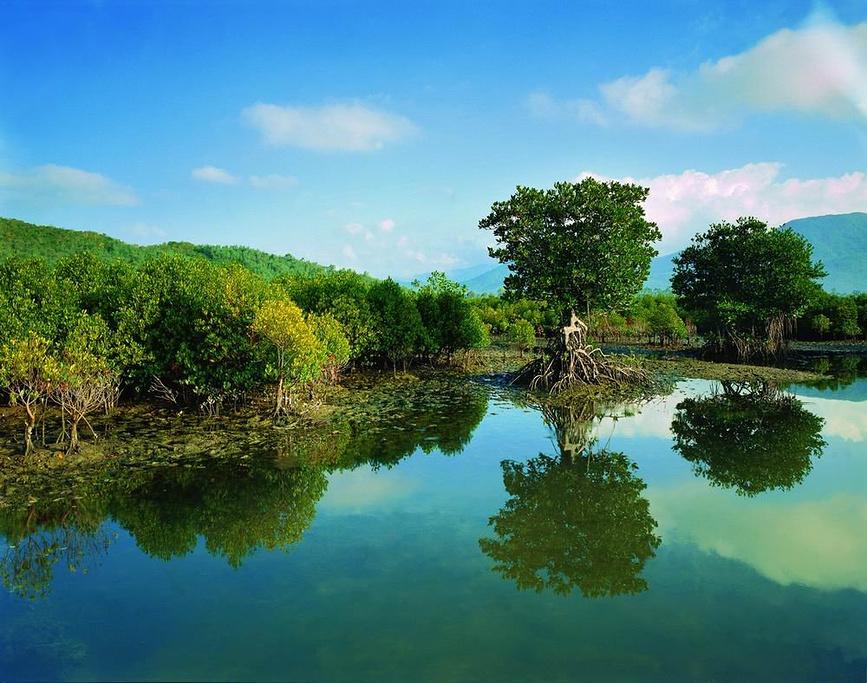 2015林东寨港红树林自然保护区