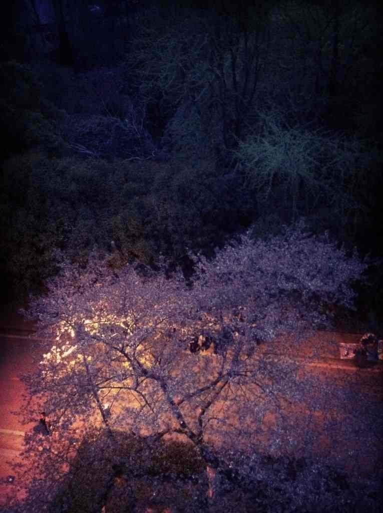 苏沪杭十日游,杭州旅游后宫,去哪儿玩具攻略五4社区的熊攻略夜攻略图片