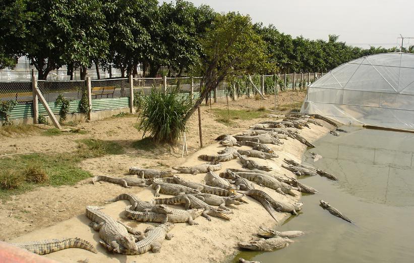 广州鳄鱼公园地址_广州鳄鱼公园地图