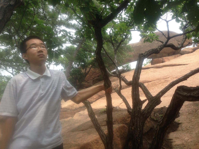鞍山最古老的树是什么