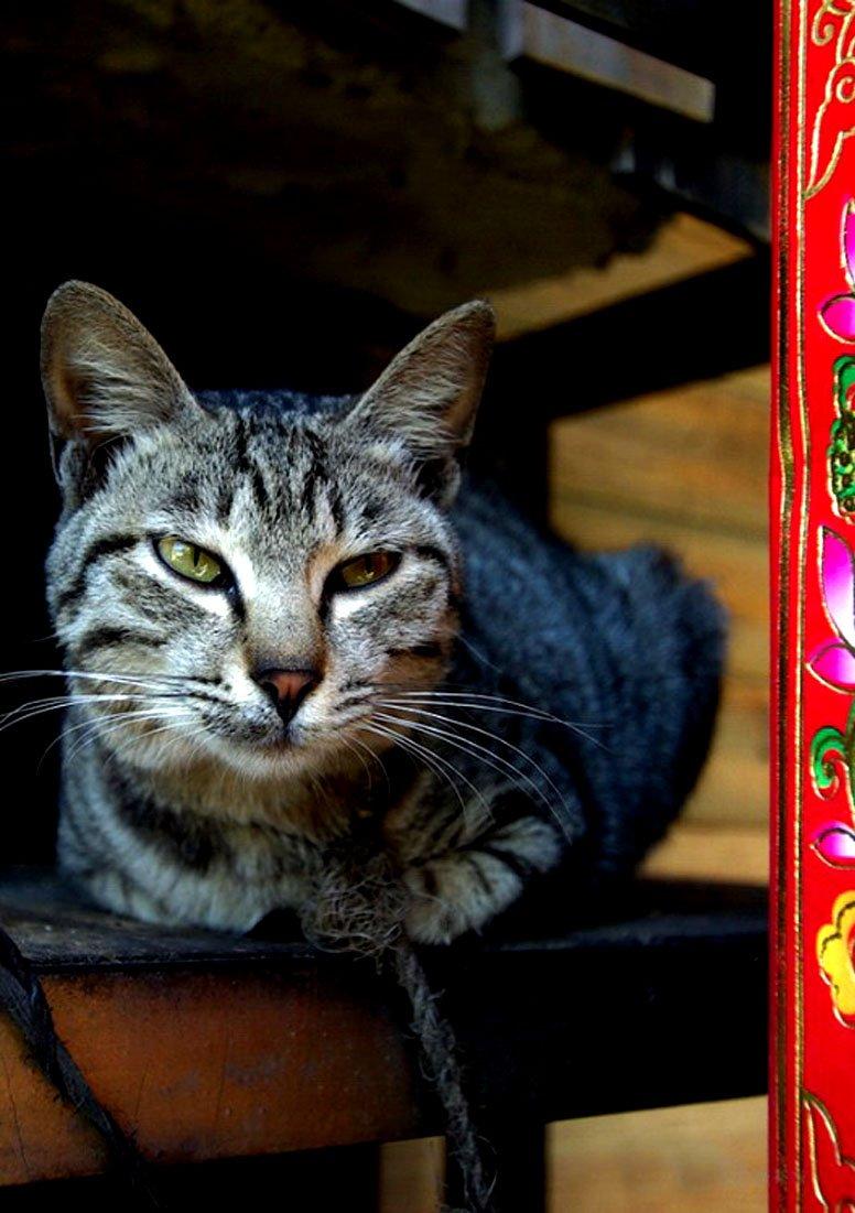 壁纸 动物 猫 猫咪 小猫 桌面 776_1101 竖版 竖屏 手机