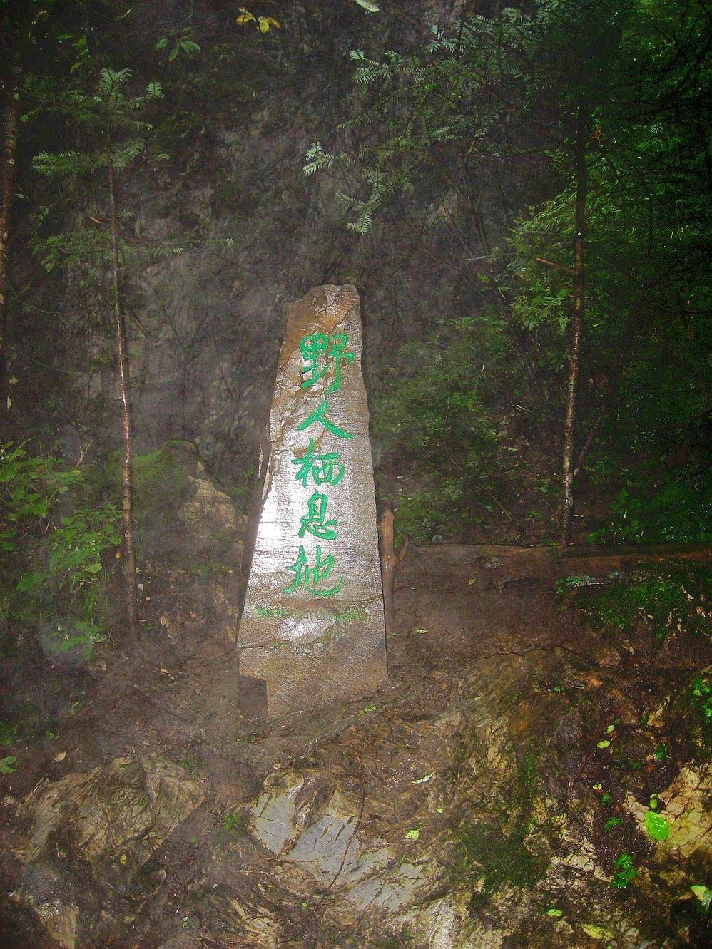 夏天森林手绘手机壁纸
