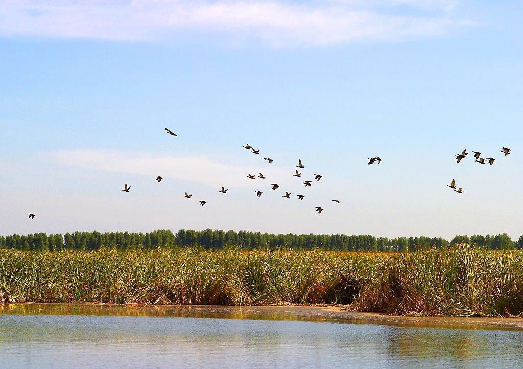 点评(4条) 查干湖旅游度假区夏季可以观赏大湖湿地,草原风光