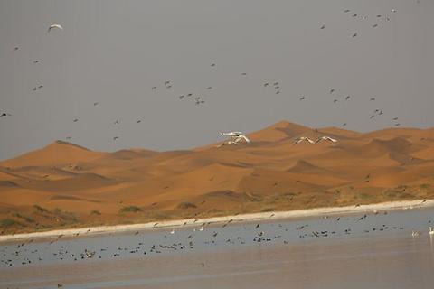 腾格里沙漠天鹅湖旅游景点攻略图