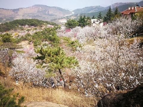 十梅庵风景区旅游景点图片