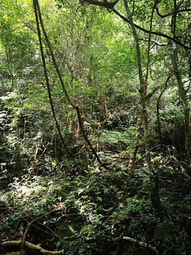 大桂山国家森林公园旅游景点攻略图