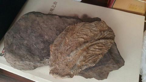 关岭化石群国家地质公园旅游景点攻略图