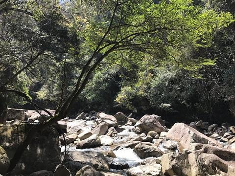 城市生态森林公园旅游景点图片