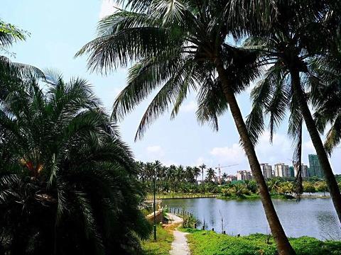 椰子大观园旅游景点攻略图