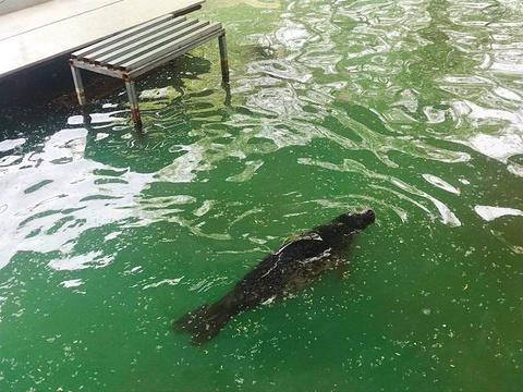 本溪动物园旅游景点图片