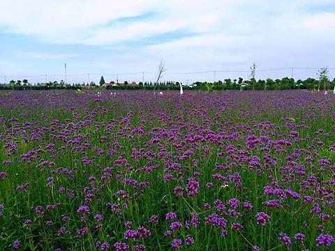 紫海鹭缘浪漫爱情主题公园旅游景点图片