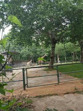 上海动物园旅游景点攻略图