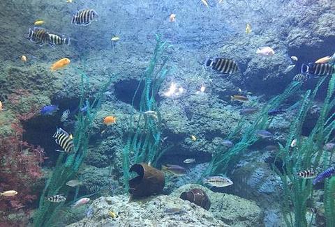 中泰海洋世界旅游景点攻略图