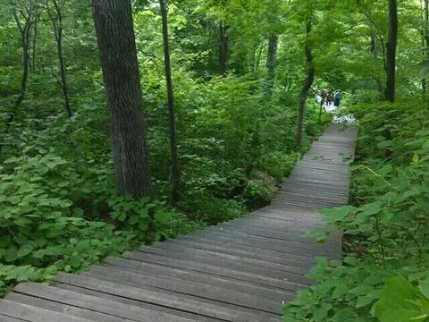 吊水湖森林生态风景区旅游景点图片