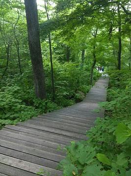 吊水湖森林生态风景区旅游景点攻略图