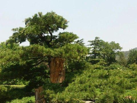 香山旅游景点图片
