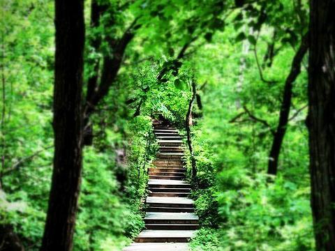 五家山森林公园旅游景点图片