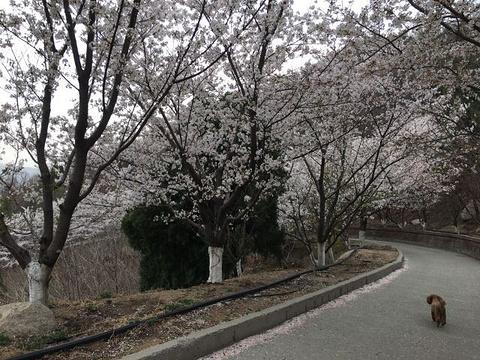 樱花山风景区旅游景点图片