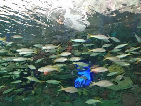 加拿大瑞普利水族馆旅游景点图片