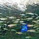 加拿大瑞普利水族馆