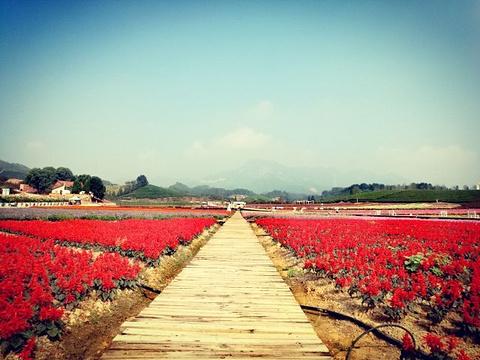 花田小镇旅游景点图片
