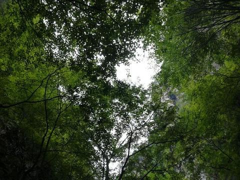 天子山旅游景点图片