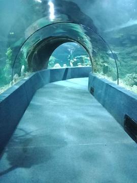 南昌海洋公园旅游景点攻略图