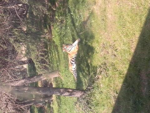 长白山虎林园旅游景点图片