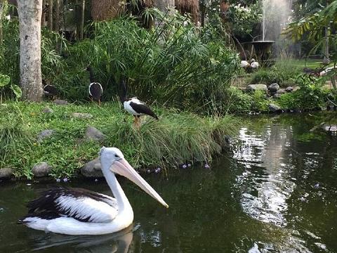 巴厘岛鸟园旅游景点图片