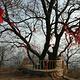 双龙山森林公园