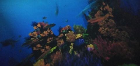 威海神游海洋世界旅游景点攻略图