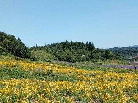 岗山花海旅游景点图片